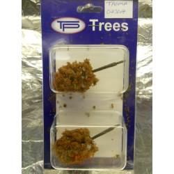 ** Tasma 073017 Ash Tree x 2 - Autumn Approx 80mm